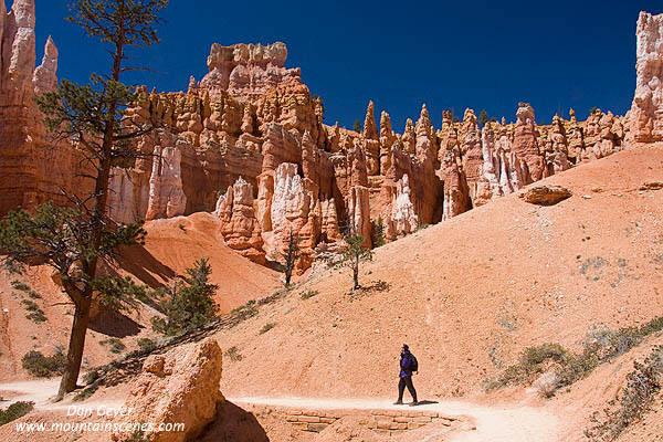 Queen S Garden Bryce National Park Hiker Utah Photos