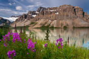 Image of Crowfoot Mountain above Bow Lake and Fireweed