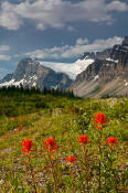Image of Crowfoot Mountain and Paintbrush in bloom