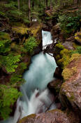 Image of Avalanche Gorge in Glacier National Park.