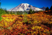 Image of Mount Rainier above Fall Colors