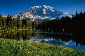 Image of Mount Rainier and Asters
