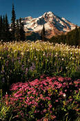 Image of Mount Rainier and Pink Heather