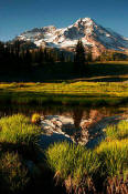 Image of Mount Rainier Reflection, Indian Henry's