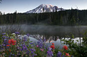 Image of Mount Rainier above Reflection Lakes and flowers