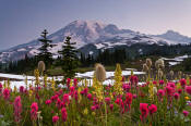 Image of Mount Rainier above flower meadows
