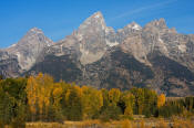 Image of Grand Teton above autumn colors, Grand Teton National Park