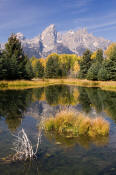 Image of Grand Teton reflection, autumn, Shwabacker Landing