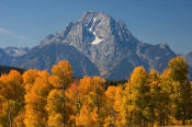 Image of Mount Moran above aspens in autumn, Grand Teton National Park