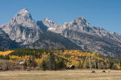 Image of Grand Teton above fall colors, Grand Teton National Park