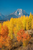 Image of Mount Moran and colorful aspen near Oxbow Bend, Grand Teton National Park