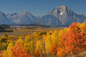 Image of Mount Moran above fall color near Oxbow Bend, Grand Teton National Park