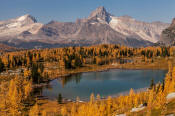 Image of Cathedral Mountain above Opabin Lake and fall larches
